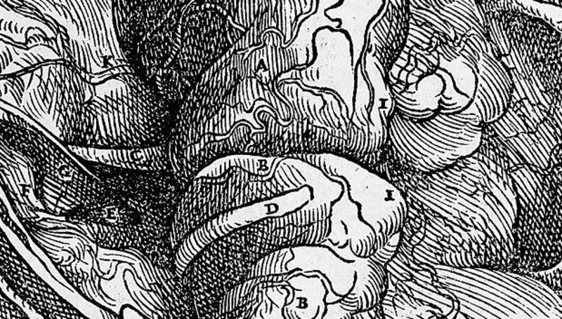 "FIGURE 1 | Reproduction from a drawing of the brain in ""De humani corporis fabrica libri septem"" by the anatomist Andreas Vesalius (Basel, 1543) Source: Wikimedia Commons"